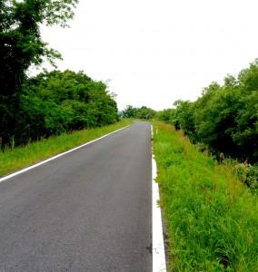 緑に囲まれたサイクリングロード
